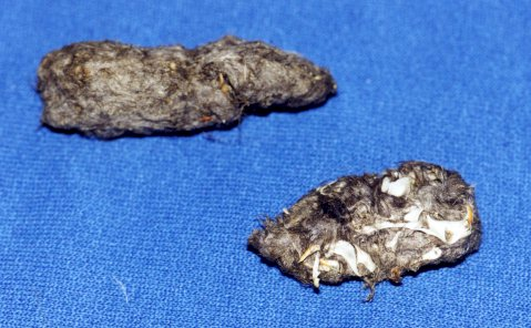 what is an owl pellet