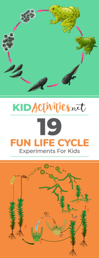 19 Fun Life Cycle Experiments For Kids [Plant and Animal Life Cycles
