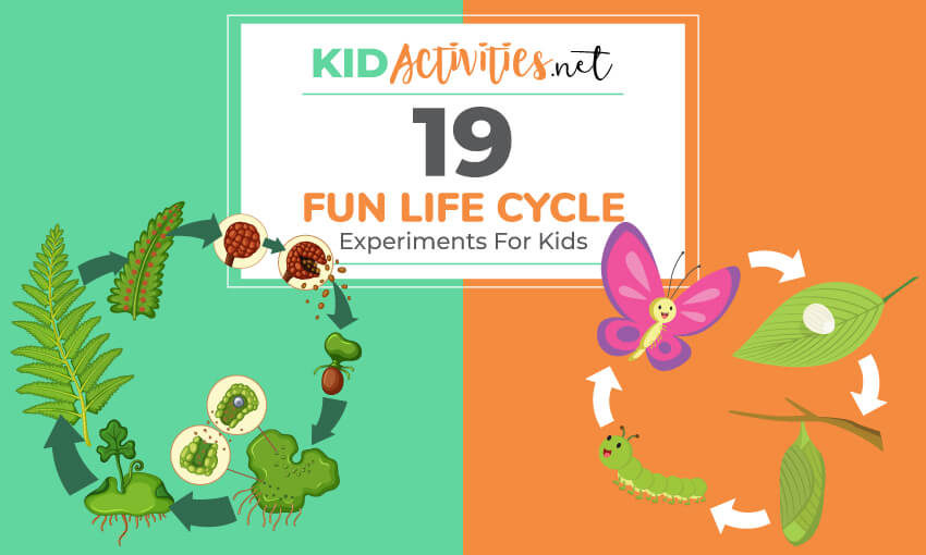 A collection of life experiments for kids.