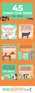 A collection of 45 cow jokes for kids. These are school appropriate and are great for telling at the lunch table, in the classroom, or even on long road trips. Enjoys!