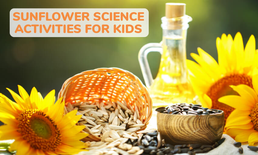 A collection of sunflower science activities for kids. A great way to get kids learning and experimenting with sunflowers.
