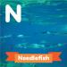 A description of the animal, needlefish.