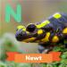 A description of the newt.