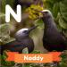 A description of the animal noddy.