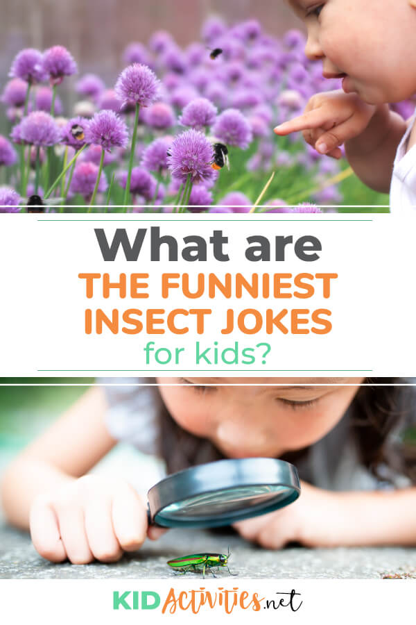 What are the funniest insect jokes for kids? Here you will find 61 of the top insect jokes that are school appropriate.