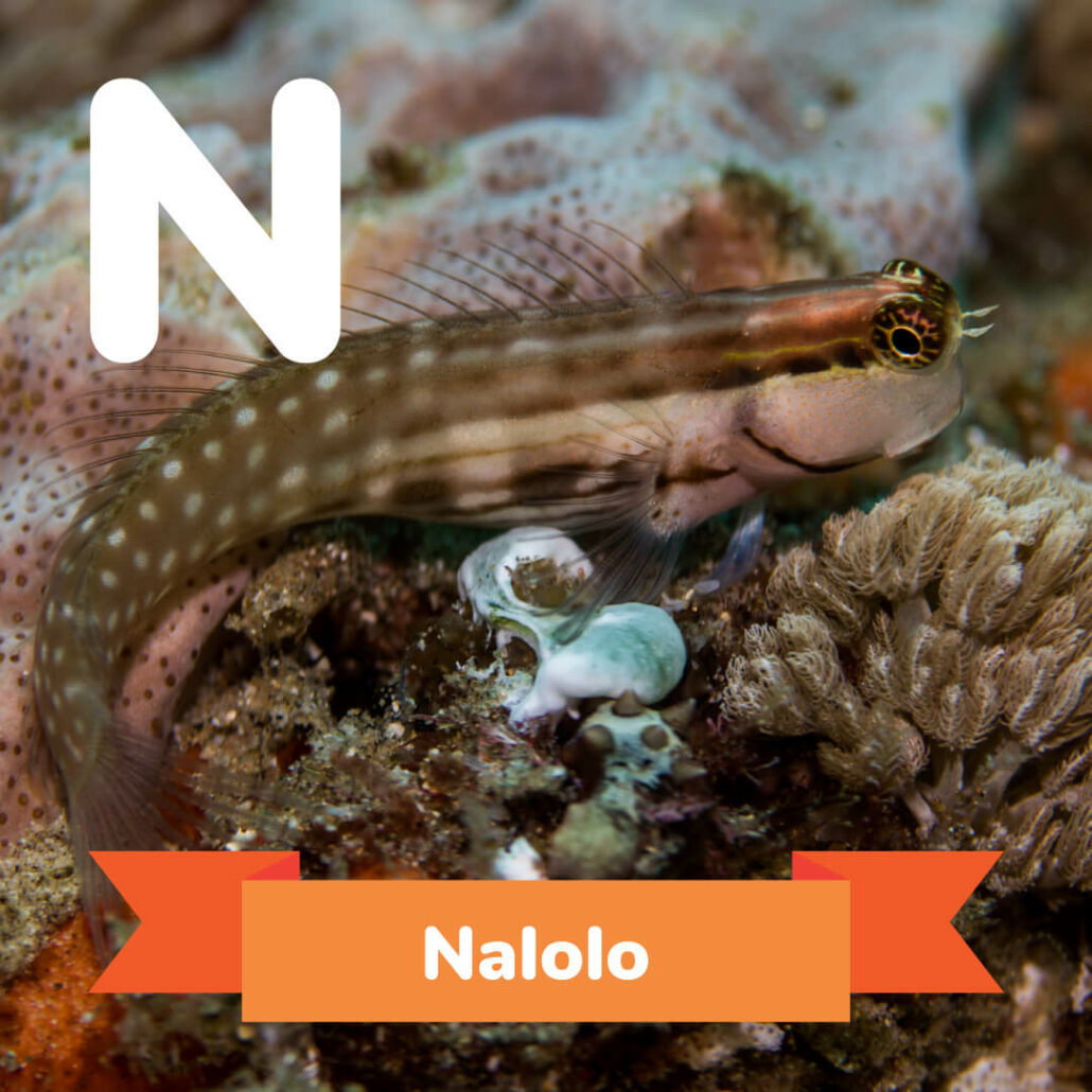 A picture of the Nalolo