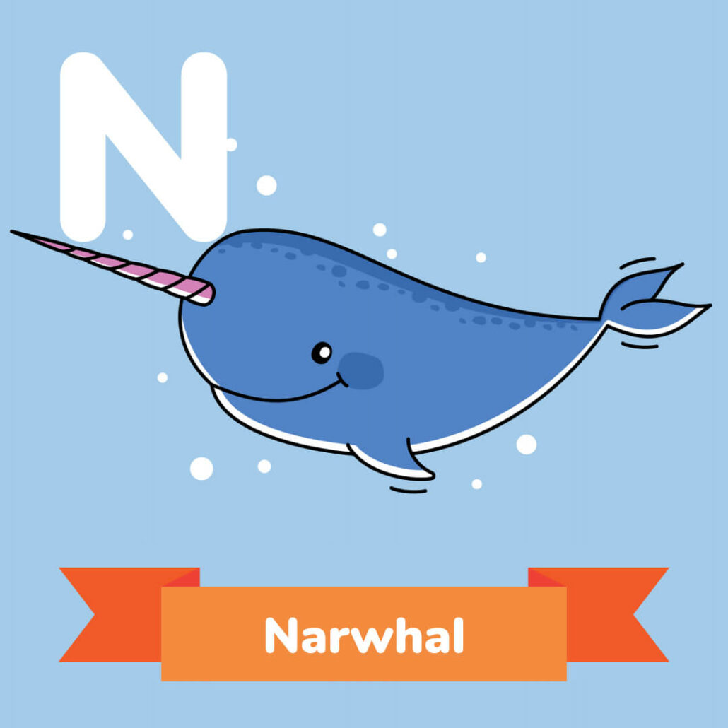 A picture of the Narwhal