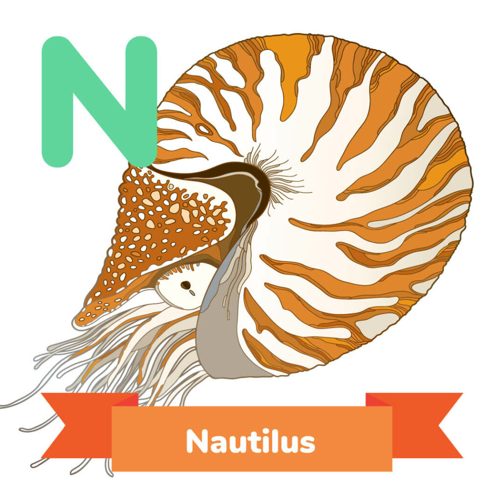 A picture of the Nautilus.