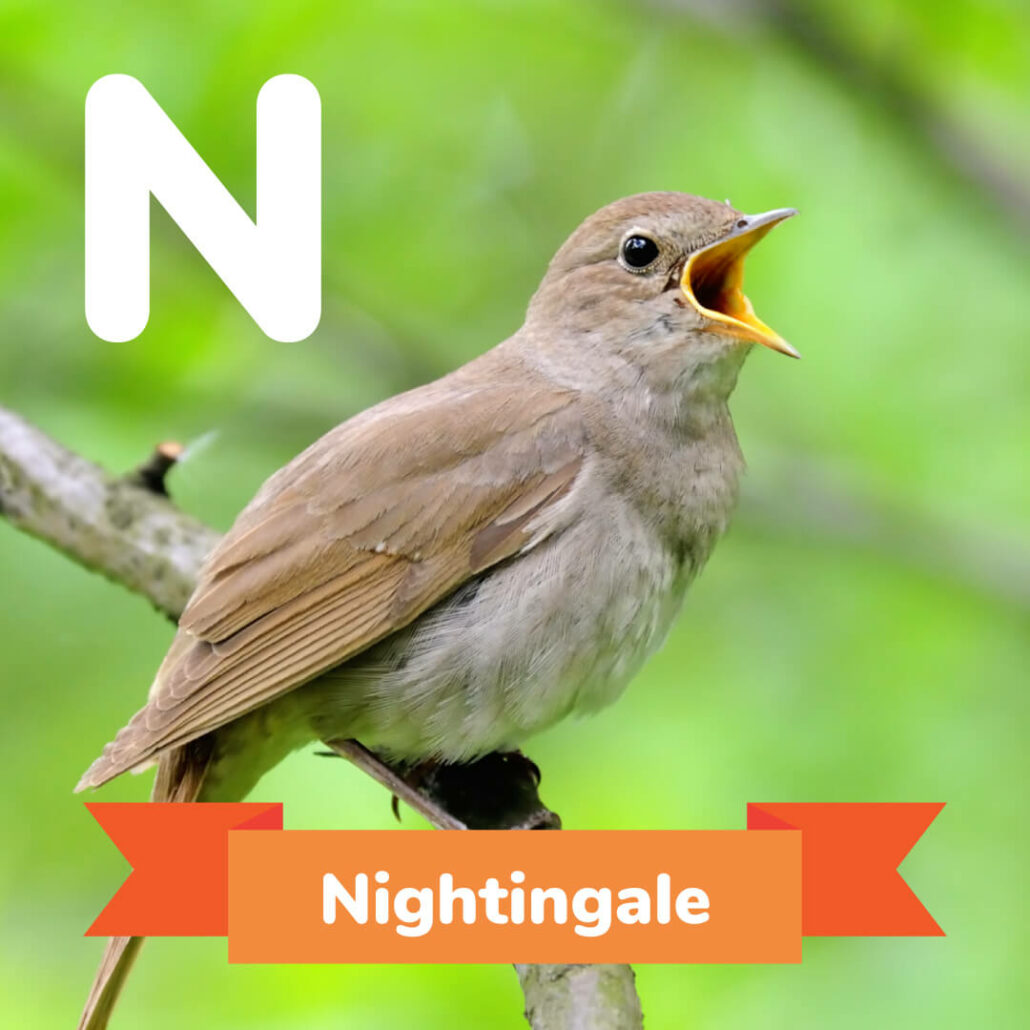 A picture of the Nightingale.